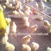 저가를 가진 농업 플라스틱 그물 (HDPE)