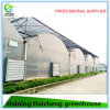 중국에서 최신 강철 관 온실 프레임