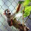 Rede inoxidável do jardim zoológico do fio de aço