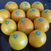 Fornecedor regular para a laranja fresca chinesa do umbigo