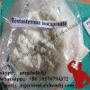 Testoterone bianco Isocaproate CAS 15262-86-9 dello steroide anabolico di iso della prova della polvere