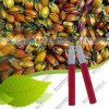 يزوّد منتج مباشرة صالح للأكل لون زهرة غردينيا أحمر إنتاج