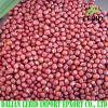 Feijões de Adzuki novos da colheita, feijões vermelhos pequenos para a exportação