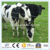 Acoplamiento de la cerca del campo del ganado para los animales