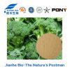 Extrait normal de broccoli du supplément 100% de soins de santé