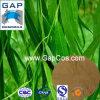 Salicin weiße Weide-Barke-Pflanzenauszug