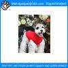 صغيرة كلب جرو لأنّ عمليّة بيع محبوب [كلوثس-بت] [كلوثينغ-دوغ]