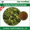 Сапонины Terrestris Tribulus унифицировали выдержку