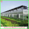 Sale를 위한 Venlo Polycarbonate Sheet 정원 Greenhouses