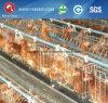 Silberne Stern-Batterien für Legehennen (A3L90)