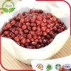 Feijões do Vigna de Adzuki (feijões vermelhos)