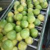 新しく新しい穀物の蜂蜜のPomelo