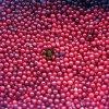 IQF figé Wild Lingonberry de New Crop
