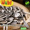Les graines de tournesol fraîches chinoises de bonne qualité d'exportation