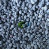 IQF Cultivated Blueberry in Highquality