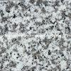 자연적인 Polished 또는 Honed/Harmmered G439 White Granite Stone 를 위한 또는 Paving/Countertop/Wall/Floor