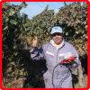 Koham 24voltage DC Grape Yard Potenza Cesoie