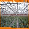 Planting Vegetalbes&Fruits를 위한 중국 Supplier Venlo Type Glass Greenhouse
