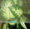 Feuille de Sun Sheet/PC de polycarbonate/panneau de tentes utilisé par serre chaude préfabriquée