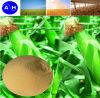 Fonte da planta do pó do ácido aminado do fertilizante orgânico 52%