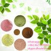 Oleuropeina verde oliva della polvere dell'estratto del foglio di fabbricazione