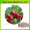 Approvisionnement d'usine avec le meilleur extrait de cerise d'Acerola de qualité