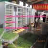 Machine automatique de pousse de fèves de mung