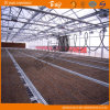 Bon Cost Performance Venlo Type Glass Multi-Span Green House pour Planting Vegetables