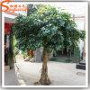 Árvore artificial personalizada do Ficus da falsificação da fibra de vidro