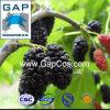 Extrait pur de plante fruitière de mûre d'approvisionnement de constructeur