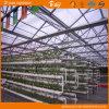 Chambre verte de technologie de polycarbonate de Multi-Envergure néerlandaise de feuille