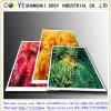 Papier de synthétique de l'utilisation 75mic pp d'impression de Digitals