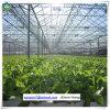 Invernadero de cristal de la fuente de la fábrica de China con el sistema hidropónico