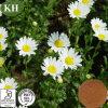 Extracto de Feverfew; Chrysanthemum Parthenium Extracto Parthenolide 0.7% 0.8%