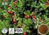 Extracto de Folha de Bearberry Arbutin 99%
