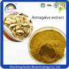 Extrait Astragalus Traditionnel Traditionnel Traditionnel Chinois avec Astragaloside