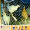 Плетение провода курятника цыпленка поставщика Китая Anping (LT-421)