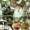 China 100% het Natuurlijke Hoornen Onkruid Extract/Icariin Powder/Epimedium Extract/CAS van de Geit: 489-32-7