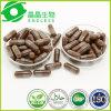 Suplemento cáncer anti hongo Reishi Extracto Powder Cápsulas