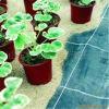 Agriculture 2015 et natte de Weed de jardin, tissu compostable biodégradable de lutte contre les mauvaises herbes, Tissu de PLA Spunbond