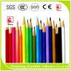 Colle à base d'eau blanche respectueuse de l'environnement de crayon