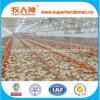 肉焼き器鶏の生産のための自動家禽装置