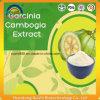 Extrait de gomme-gutte de Garcinia d'approvisionnement d'usine de GMP