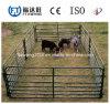 중국에서 농장 담 또는 가축 담 또는 안전 담