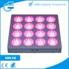 실내 Vegetable Breeding 600W Grow LED Lamp
