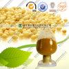 Isoflavones naturelles d'extrait de plante de haricot de soja 40%