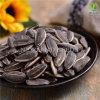 よい価格の卸売の焼かれ、塩を加えられたヒマワリの種の新しい穀物