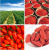 100%自然なBarbary Wolfberryのフルーツの蜂の花粉、健康食品