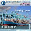 덴마크에 Sea From 중국의 최고 Cargo Shipping Services