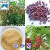Schizandra Chinensis Extract mit Schizandrol B